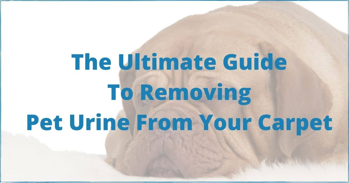 The Ultimate Guide to Removing Pet Urine From Your Carpet